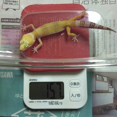 20160906keiryou_4644
